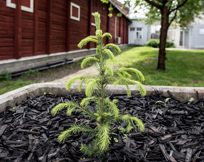 Greenstar Jyväskylä